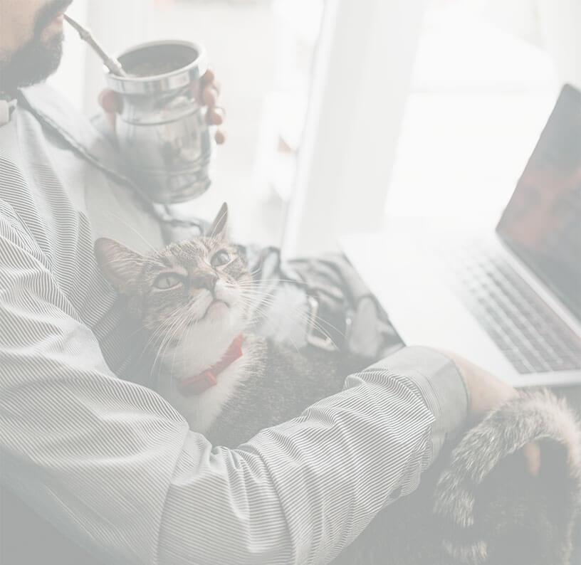 Kot Rysiek wita Cię serdecznie na Zielony Targu :)