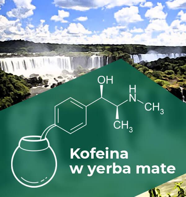 Kofeina w Yerba Mate - sprawdzamy jak to z tym jest