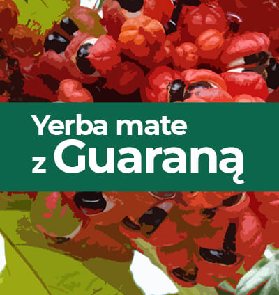 Jaką yerba mate z guaraną wybrać?